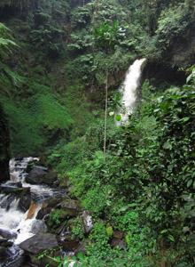 Nyungwe Forest Waterfall Hike