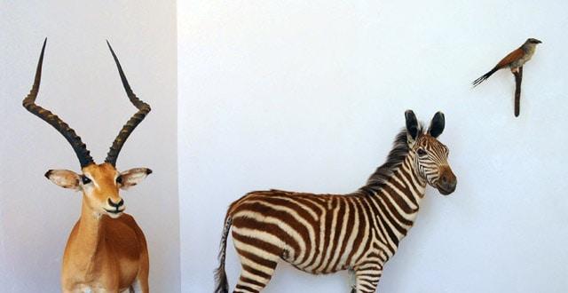 Animals in a Corner